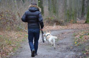 Gdzie na spacer z psem?